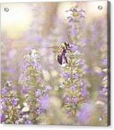 Bee Beeutiful Acrylic Print