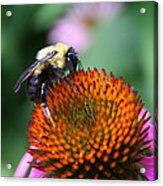 Bee-ing Happy Acrylic Print
