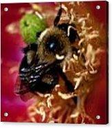 Bee Life 2 Acrylic Print