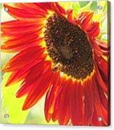 Bee On A Sunflower Acrylic Print