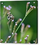 Bee On End Acrylic Print