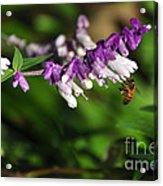 Bee On Flower Acrylic Print by Kaye Menner