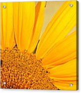 Bee On Sunflower Acrylic Print