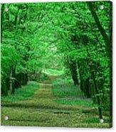 Beechwood Grove Acrylic Print