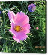Bees Favorite Flower Two Acrylic Print