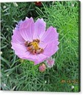 Bees Feeding Acrylic Print