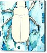 Beetle Swim Acrylic Print