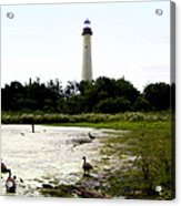 Behind The Cape May Lighthouse Acrylic Print by Bill Cannon