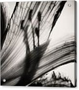 Behind The Petals Black And White Acrylic Print