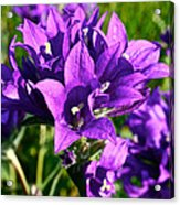 Bell Flowers Acrylic Print