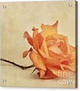 Bellezza Acrylic Print
