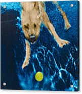 Belly Flop Acrylic Print