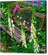 Bench Among The Foxgloves Acrylic Print