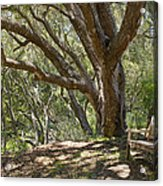 Bench And Tree In Cambria II Acrylic Print