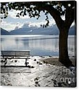 Bench And Tree On The Lakefront Acrylic Print