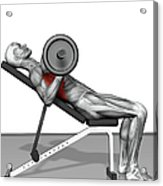 Bench Press Incline (part 2 Of 2) Acrylic Print