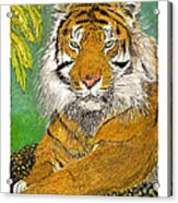 Bengal Tiger With Green Eyes Acrylic Print by Jack Pumphrey