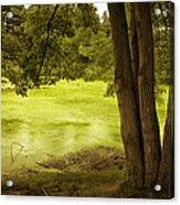 Bent Twig 5 Acrylic Print
