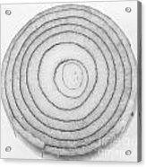 Bermuda Onion Spiral Bw Acrylic Print