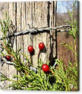 Berries And Barbs Acrylic Print