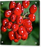 Berry Brilliant Acrylic Print