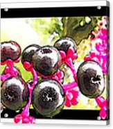 Berry Burst   Poke Berries Acrylic Print