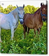 Best Buds Out To Pasture Acrylic Print