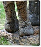 Best Foot Forward Acrylic Print by Joanne Kocwin