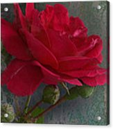 Betty's Red Rose II With Decorations Acrylic Print