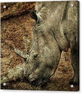Between A Rock And A Hard Place Acrylic Print by Fiona Messenger