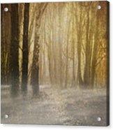 Beware Misty Woodland Path Acrylic Print