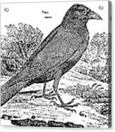Bewick: Raven Acrylic Print