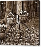 Bicycle Built For Three Acrylic Print