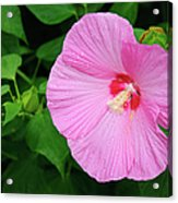 Big Bold Pink Beauty Acrylic Print