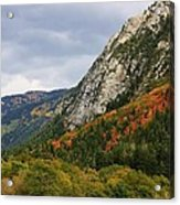 Big Cottonwood Canyon 2 Acrylic Print