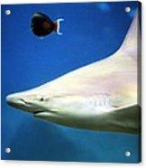 Big Fish Little Fish Acrylic Print