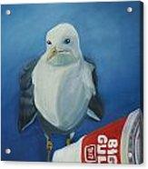 Big Gull Acrylic Print by Amy Reisland-Speer