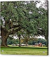 Big Oak And The Tractors Acrylic Print