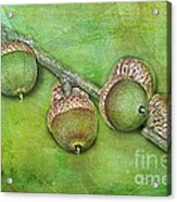 Big Oaks From Little Acorns Grow Acrylic Print by Judi Bagwell
