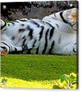 Big Pussycat Acrylic Print