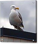 Big Seagull Acrylic Print