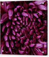 Big Wet Purple Acrylic Print
