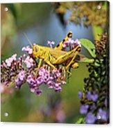 Big Yellow Grasshopper Acrylic Print