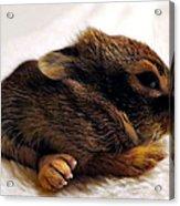 Bigfoot Acrylic Print