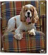 Bingo And His Chair Acrylic Print
