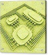 Biotech Acrylic Print