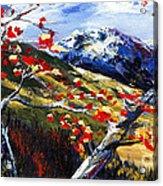 Birch Forest 5 Acrylic Print