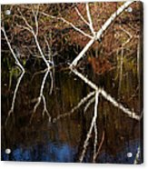 Birch Reflections Acrylic Print
