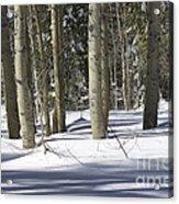 Birch Trees In Snow Acrylic Print