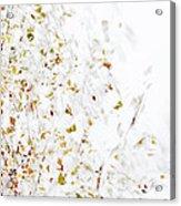 Birch Twigs In Autumn - Multiple Layers Acrylic Print
